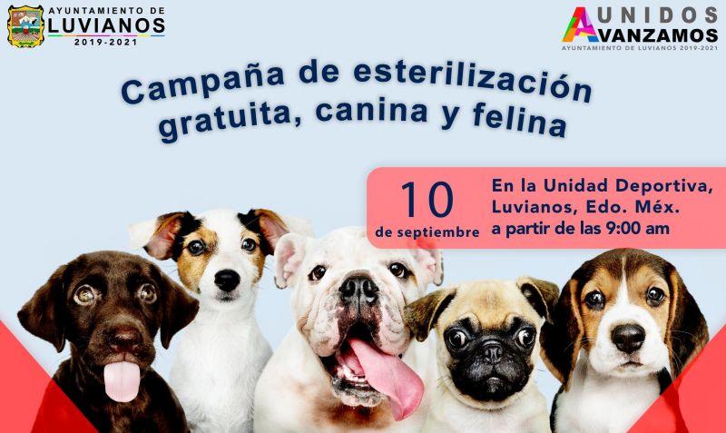"""""""Quinta Campaña de Esterilización Canina y Felina"""""""