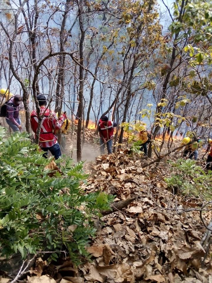 Sofocación de incendio forestal en la comunidad de Pinzanes